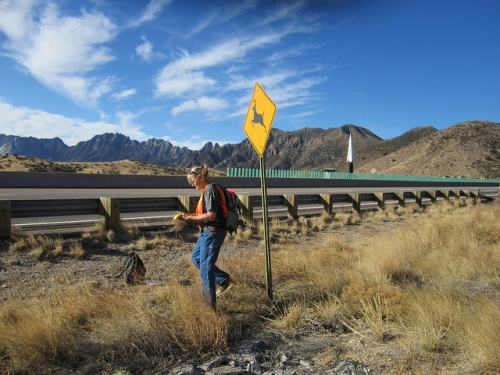 Archaeologist Karen Wening surveys the highway right-of-way at the top of San Augustin pass on US Highway 70, about 10 miles east of Las Cruces.